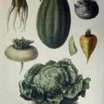 Melon No. 14