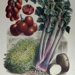 Tomatoes no 37