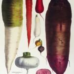 Carrot No. 2